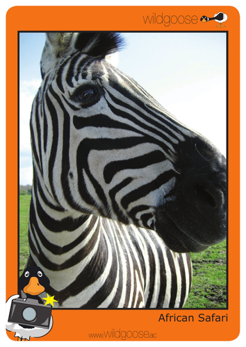 African Safari Photopack and Teachers' Notes
