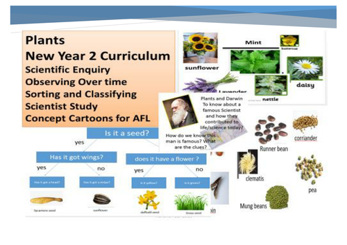 Plants Year 2 New Science Curriculum
