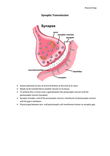 Px Diagram Showing Prostate Cancer That Has Spread To The Bones Cruk Svg as well Os System Diagram A furthermore Image Width   Height   Version moreover Px Diagram Of The Larynx Cruk Svg also Px Diagram Of An Ileostomy With A Bag Cruk Svg. on work diagram email