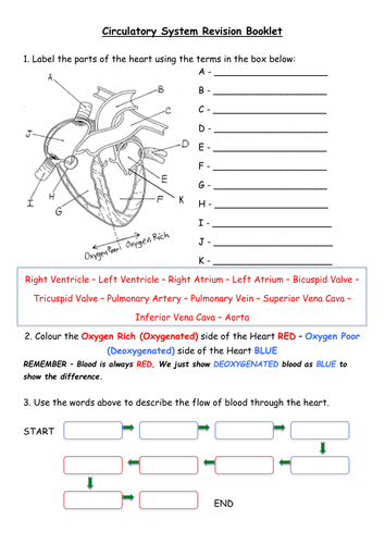Heart blood vessels chd blood revision booklet by rossydunn heart blood vessels chd blood revision booklet by rossydunn teaching resources tes ccuart Images