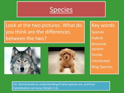 Edexcel B1.3 Species