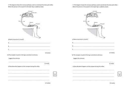GCSE Revision Nervous System Neurones worksheet by beckystoke – Nervous System Worksheets