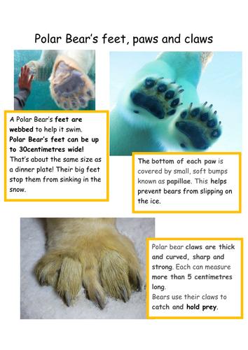 Polar Bear Fact Find Resources: Non-chronological reports