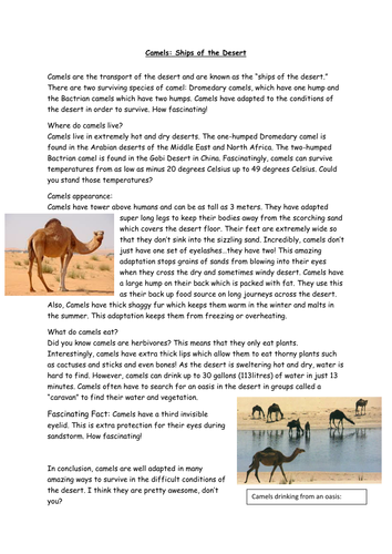 Camel Report for Deconstruction: Non-chronological Reports.