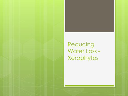 Xerophytes - Reducing Water Loss