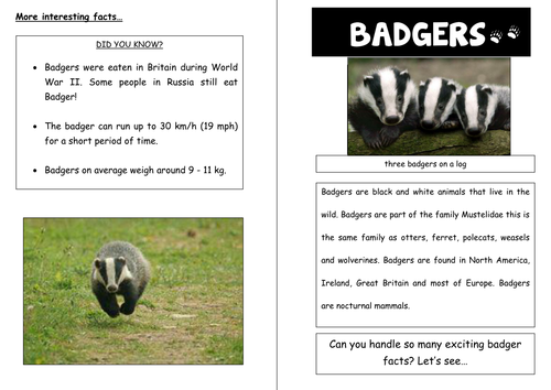 Information leaflet on foxes with example on badgers - planning and resources for at least 5 lessons