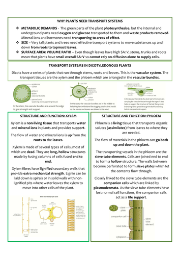 biology as level ocr revision notes transport in plants by nathandpw teaching resources tes. Black Bedroom Furniture Sets. Home Design Ideas
