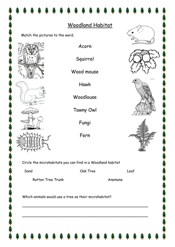 Woodland Habitat Worksheets Differentiated By