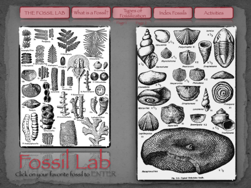 The Fossil Lab Interactive