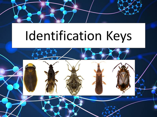 Identification / Classification Keys Presentation - Science - fun and engaging