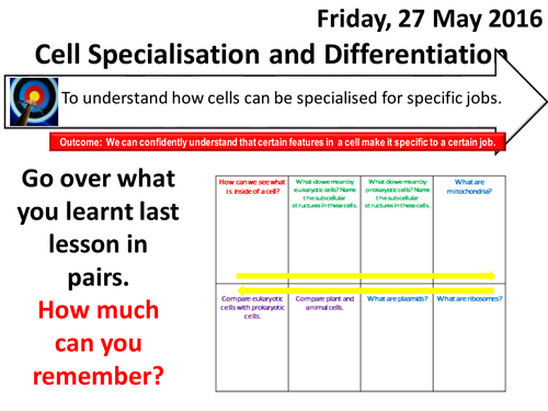AQA NEW GCSE Biology Cell Biology l Lesson 2 Cell – Cell Differentiation Worksheet