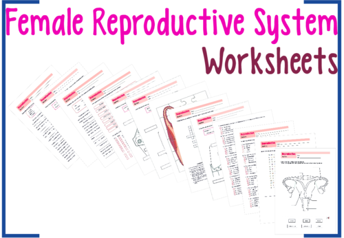 reproductive system worksheets bundle by uk teaching resources tes. Black Bedroom Furniture Sets. Home Design Ideas