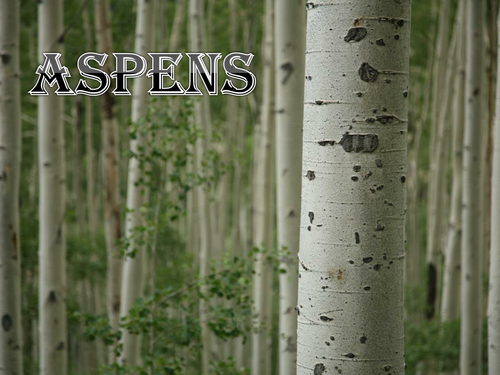 Aanalysis of Edward Thomas's Aspens