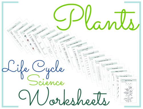 plant life cycle literacy math crafts worksheets by biogeoscience teaching resources tes. Black Bedroom Furniture Sets. Home Design Ideas
