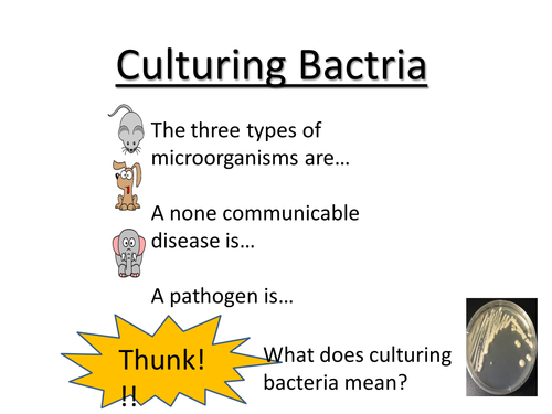 Aseptic techniques/culturing bacteria/testing antibiotics  *BIG PRACTICAL*