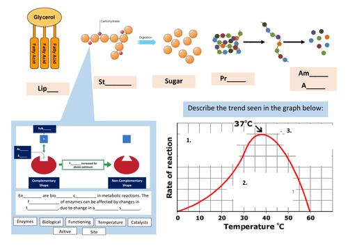 Molecules & Enzymes