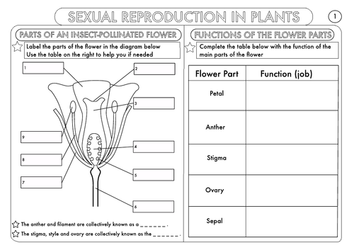 Plant Reproduction Worksheet Pack by beckystoke Teaching – Parts of a Plant Worksheet