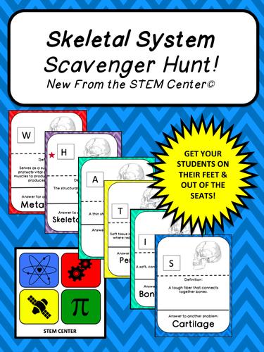 Skeletal System SCAVENGER HUNT!