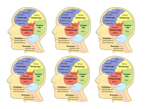 The Brain and Mind (#ReadyToGo)