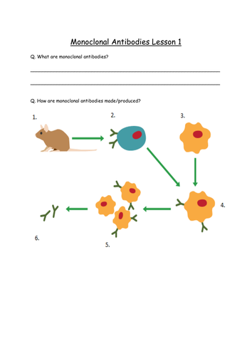 AQA GCSE Biology 2016 Specification 4.3.2.1-2 and 4.3.3.1 - Monoclonal Antibodies