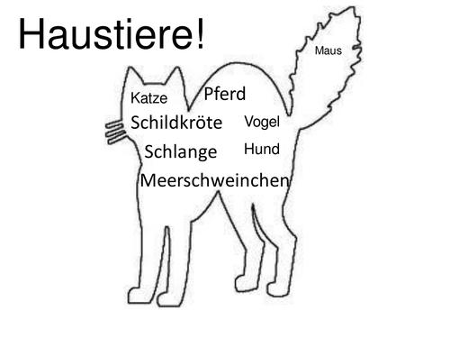 KS3 German Haustiere/pets 3 lessons