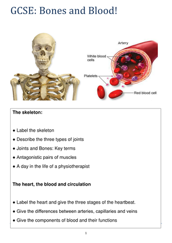 The Skeletal System: GCSE and A Level Biology/Access-  8 RESOURCES -  PPTs and Booklets