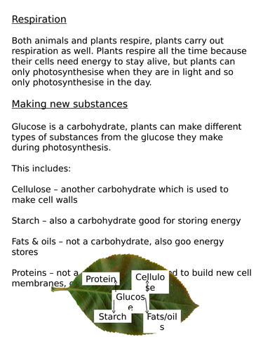 NEW AQA Trilogy GCSE (2016) Biology - Products of Photosynthesis