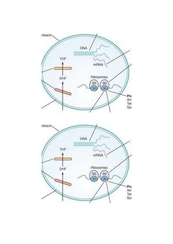 A level Biology Antibiotic resistance