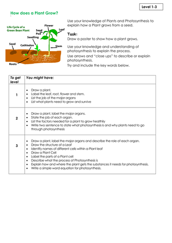 New ks3 assessment task plants by stargazerchick teaching new ks3 assessment task plants by stargazerchick teaching resources tes urtaz