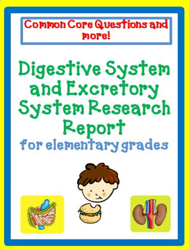 Digestive and Excretory System Report