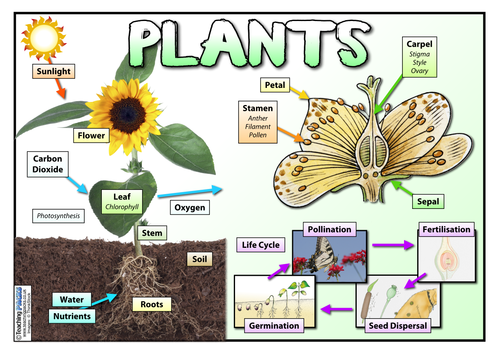 Plants Word Mat