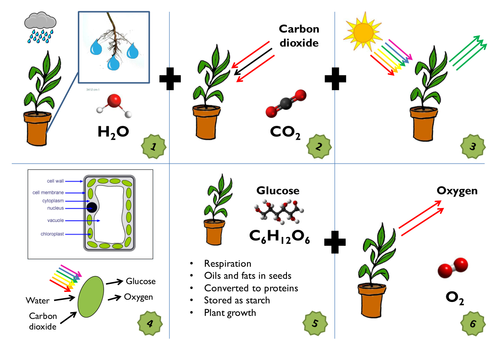 Photosynthesis KS3/KS4 Low Ability Storyboard Complete Lesson