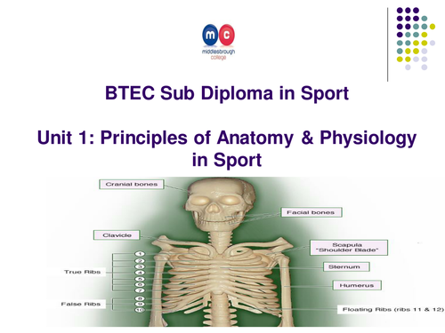 The Appendicular Skeleton and Types of Bone by robertshaw1 ...
