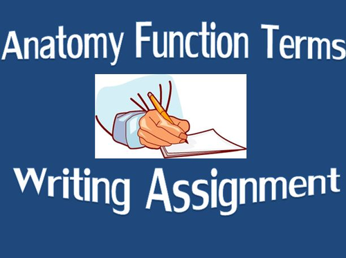 Anatomy Function Terms Writing Assignment