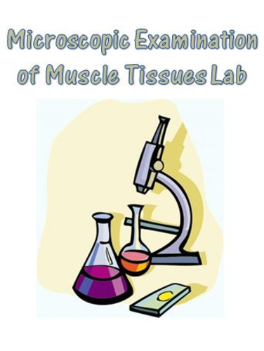 Muscular System Microscopic Examination of Muscle Tissue Lab - Anatomy & Biology