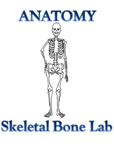 Skeletal System Bone Lab - Anatomy and Physiology by theteacherteam ...