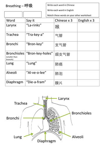 EAL Breathing worksheet in Chinese KS3