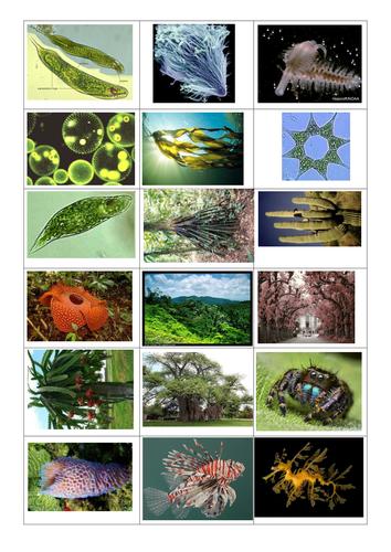 Classification Species KS3 KS4