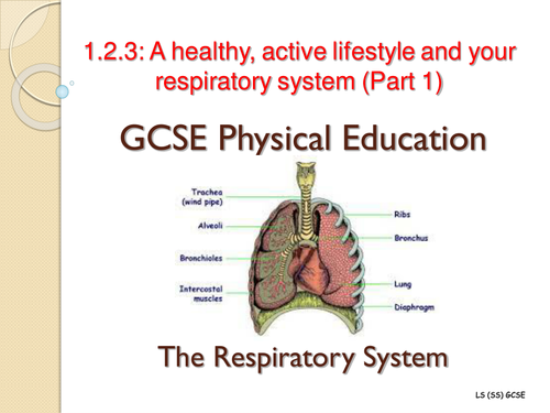 gcse pe coursework analysis of lifestyle Ocr gcse pe full course effects of lifestyle on health 23 health & wellbeing 24 healthy balanced lifestyle 25 participation trends in the uk.