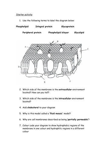 properties of phospholipids fluid mosaic structure review by cmrcarr uk teaching resources tes. Black Bedroom Furniture Sets. Home Design Ideas