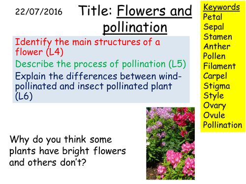 Plants flowers and pollination powerpoint by bevevans22 teaching b1 36 flowers and pollination ccuart Image collections