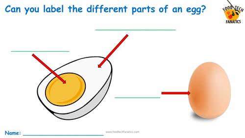 Parts of an Egg  Worksheet