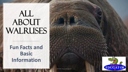 Walruses:  All About Walruses PowerPoint