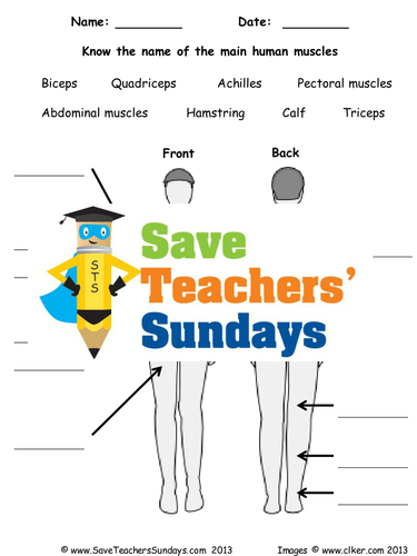Human Muscles Ks2 Lesson Plan And Worksheet By Saveteacherssundays