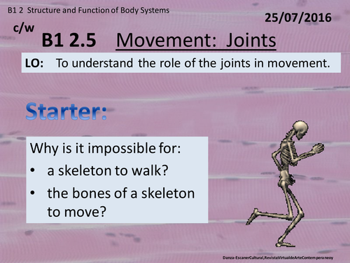 Activate 1:  B1:  2.5  Movement - Joints