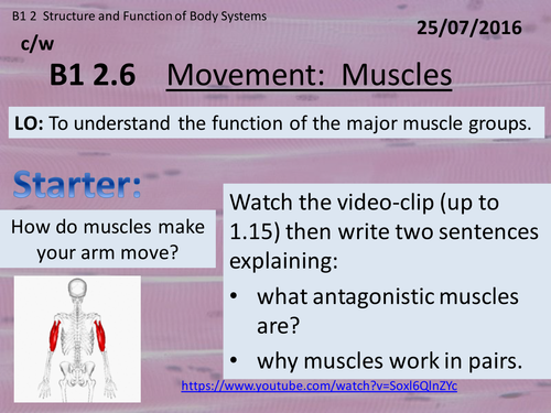 Activate 1:  B1:  2.6 Movement - Muscles