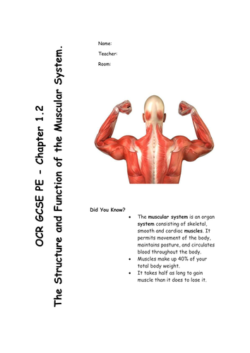 Chapter 1.2 The Muscular System - GCSE PE Revision/work booklet for OCR specification 2016