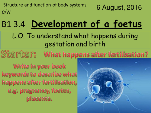 Activate 1:  B1:  3.4  Development of a foetus