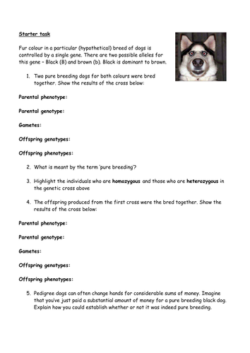 Genetic Variation Worksheet by londinium - Teaching Resources - Tes