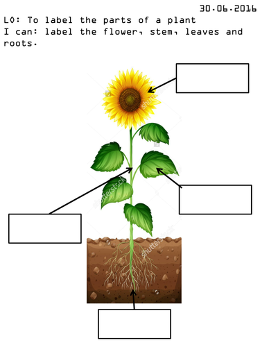 Label The Parts Of A Plant By Amywarner09 Teaching Resources Tes